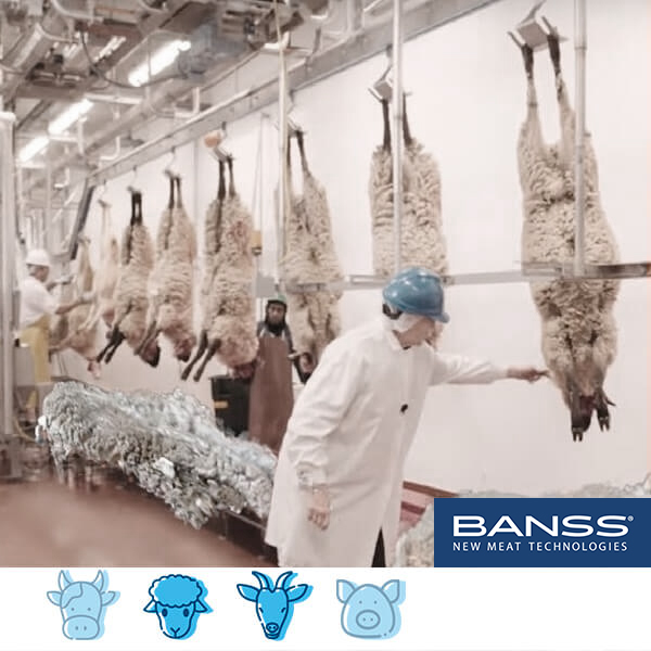 Tecnología de sacrificio y procesado para ganado caprino-ovino