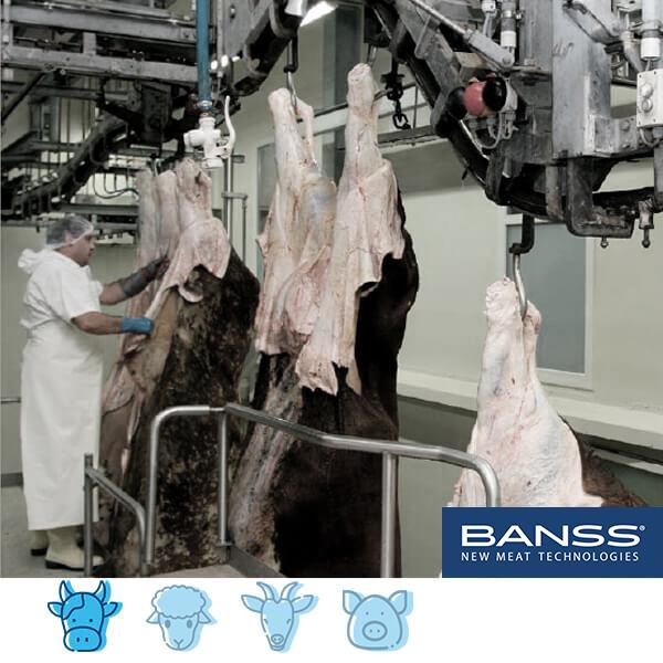 Tecnología de sacrificio y procesado para ganado vacuno